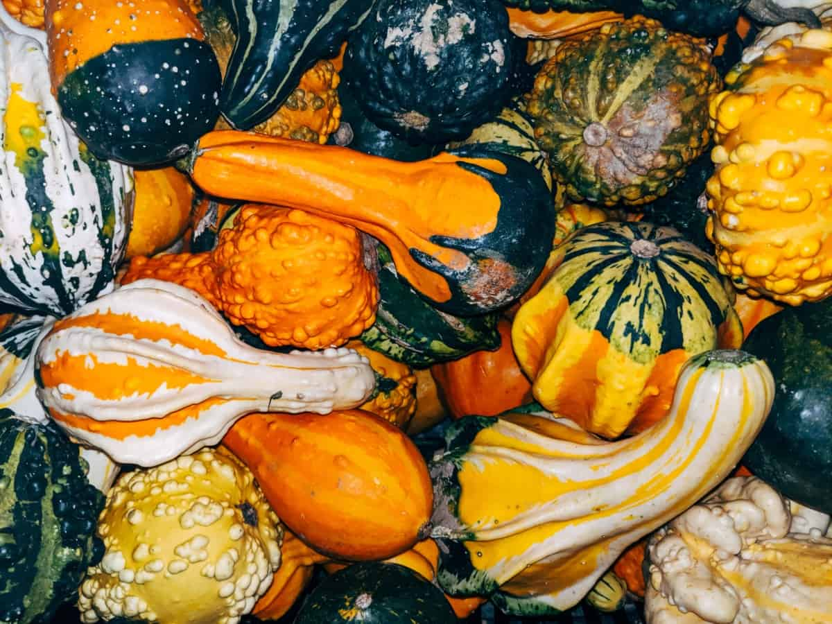Gourd Mix With Leeks